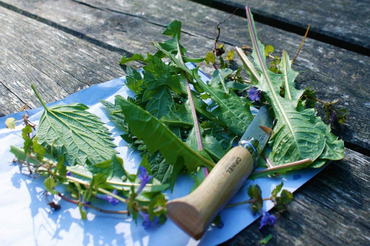 tagAlt.Foraging herbs cuttings knife Cover