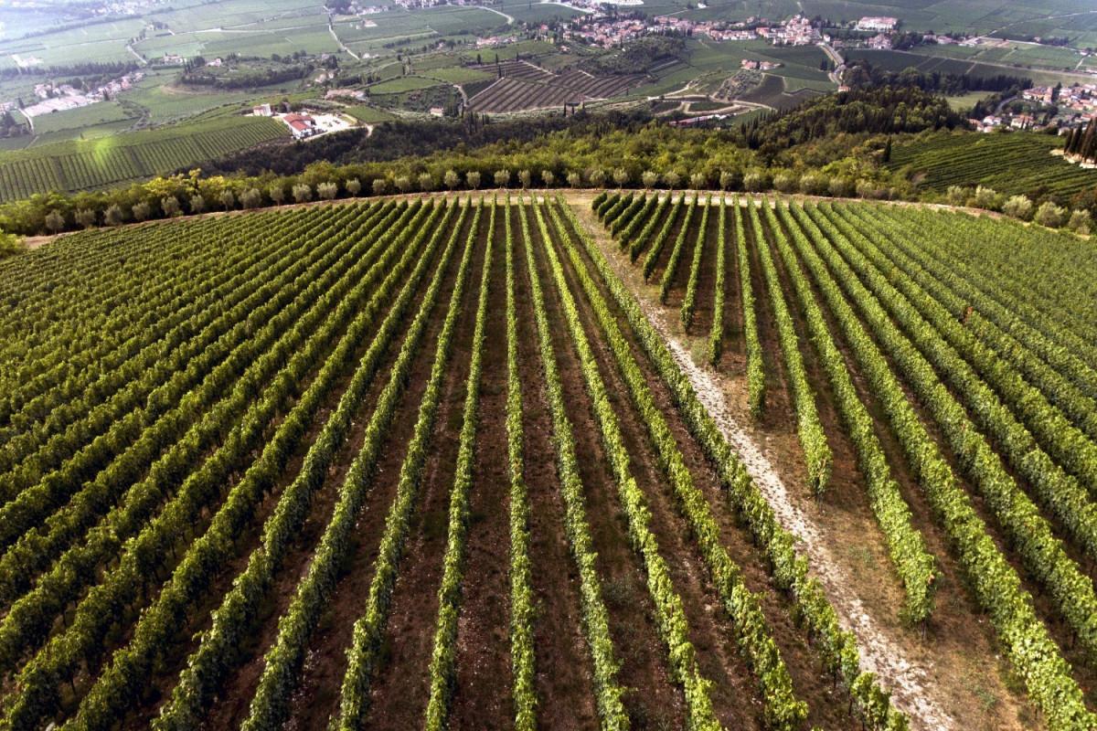 tagAlt.Tedeschi winery vineyards Fabriseria Cover 20210218