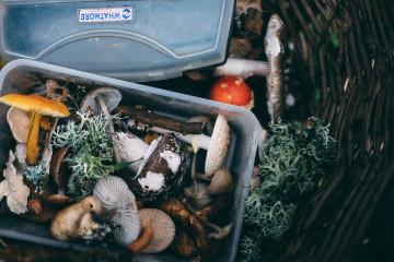 tagAlt.Box of foraged mushrooms 7
