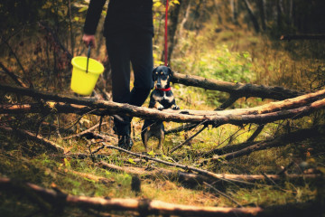 tagAlt.Man and dog foraging woods 4