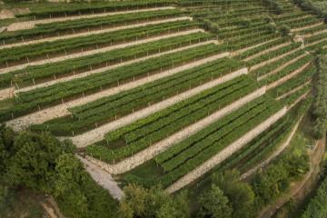 tagAlt.Tedeschi Vigneto Monte Olmi vineyards 6