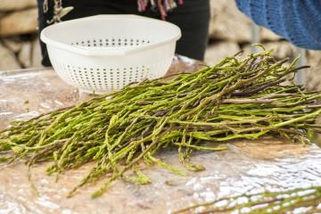 tagAlt.Wild Asparagus found food 2