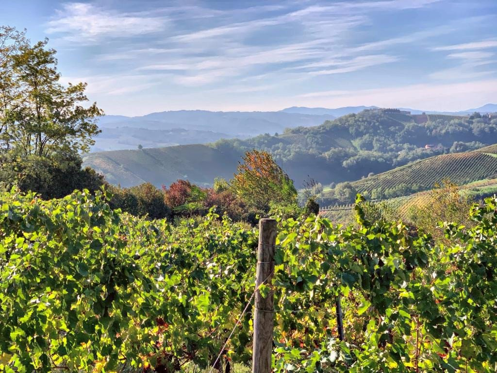 Oltrepò-Pavese-vineyards-view_20211009